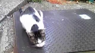 こけるネコ