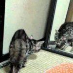 鏡にビビる猫