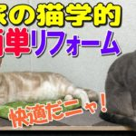 【ネコ的リフォーム】猫に危険な場所を合理的にDIYする!