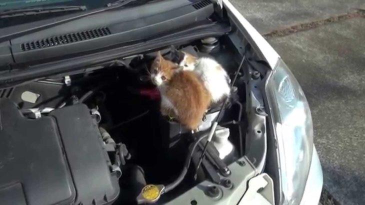 kitten  猫バンバン