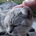 猫の集会所にいたママ猫がカワイイ