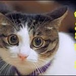猫切ない話・愛猫の死に目に会えなかったお話、待たせてばかりで『ごめんね』・招き猫ちゃんねる