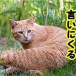 あの世不思議・人間に可愛がられた猫は恩を忘れずに会いに来てくれるお話・招き猫ちゃんねる
