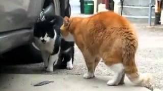 志村声ネコ