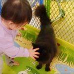 赤ちゃんがねこにチューしたら別ねこが激しくジェラシー Baby kissed a cat but then another cat become jealous