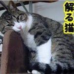 あの世猫・天国に逝ってしまったアイツは人間の言葉が解っていたようだ・招き猫ちゃんねる