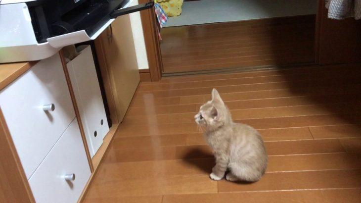 プリントアウトされるのを待つ子ねこがかわいい  Waiting kitten