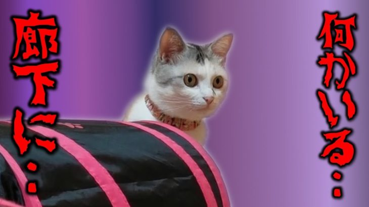 未知の気配を感じ取った猫が硬直!扉を開けた瞬間、それは一瞬にして消え去った!