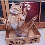 猫 不思議・21歳の老猫が病気の義理の妹の身代わりになって逝ったお話・招き猫ちゃんねる