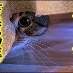 最後のストーカー・逝くその時まで、私だけを見つめてをストーカー監視してくれたね、私は幸せでした(≧∇≦)b・招き猫ちゃんねる