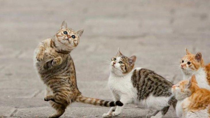 Pk Funny – 【猫おもしろ動画】思わず笑ってしまう猫のおバカ映像集