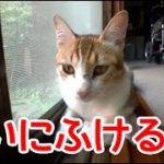 不機嫌な猫。たまには憂いにふける時もあるようです。