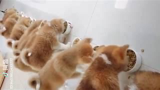 「絶対笑う」最高におもしろ犬,猫,動物のハプニング, 失敗画像集 #26