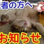 バンザイ猫チャンネルからのお知らせ!【告知あり】