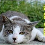 【泣ける話 ヨボヨボ老衰】お婆ちゃん猫へ・私が幼稚園の頃から今まで ありがとうね幸せだったよ、あ~だめだ涙止まんないよ・招き猫ちゃんねる
