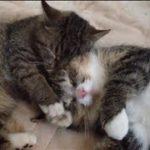 とても仲良しな2匹の猫 friendly cats