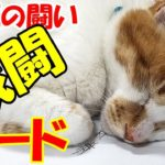 野良猫が来たらすぐに戦闘モードになる猫がすごい!A cat that gets into battle mode as soon as a stray cat comes is amazing!