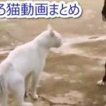 猫のおもしろ動画まとめ ~ドジ猫ちゃん~