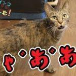 メス猫の発情期の鳴き声はヤバい!