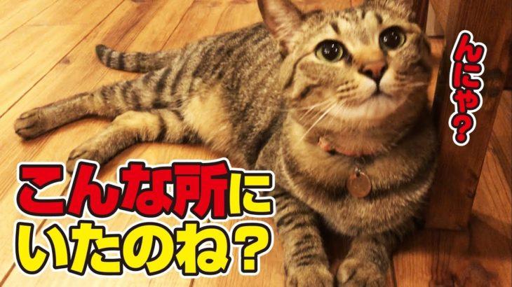 猫さんが足元でくつろいでいたので声を掛けてみた!