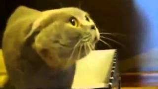 【エクソシスト】怒りすぎてイタコのババァみたいな声で喋る猫【悪魔】