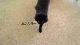しゃべるねこ、しおちゃんの「おかえり」、でも質問は聞かない。Talking cat in Japanese