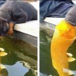 「絶対笑う」最高におもしろ犬,猫,動物のハプニング, 失敗画像集 #36