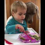 「絶対笑う」最高におもしろ犬,猫,動物のハプニング, 失敗画像集 #22