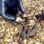 面白い猫、爆笑ネコ動画、おやつちょうだい!可愛い猫のおねだり おもしろ猫動画 面白い猫 総集編 おもしろ猫動画