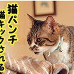 【病気葬式 威嚇】いつも猫に威嚇され猫パンチ、猫キックされて嫌われていた飼い主の切ない話・招き猫ちゃんねる