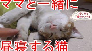 ママと一緒にお昼寝する猫。ママにぴったり寄り添います。Cat nap with mom