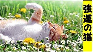 【猫 強運】運が強かった子猫のジュニア、瀕死の重傷で保護・招き猫ちゃんねる