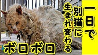 【感動 泣ける話 猫】 ボロボロの状態で発見された野良猫。 保護から1日で別猫へと生まれ変わる ・招き猫ちゃんねる