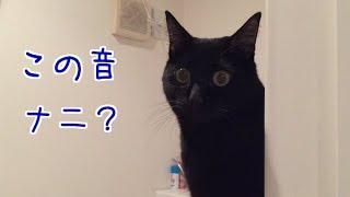 強風に驚く猫の目がまん丸でカワイイ