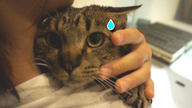 洗われる事を察知した猫がカワイイ!【すず/コテツ】