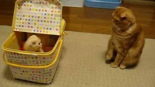 未知との遭遇 猫編 Close Encounter with Small Kitten