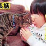 【あの世 猫老衰】いつも我慢強く接してくれて、いつも凄く賢くて、いつもさり気なく優しい俺の愛猫・招き猫ちゃんねる
