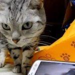 浮気は絶対ゆるさニャい!~カワウソに恋した母ちゃんに呆れ果てた猫 – I Can't Watch Youtube Without Cat's Permission