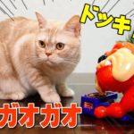 も~っとドキドキ!! 番犬ガオガオ-ネコの手MIX- さて猫たちの反応は…ココ編