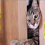 保護猫 切ない・室内飼いの猫が脱走した、仲良しだった残された猫の悲しみと切なさのお話・招き猫ちゃんねる