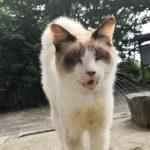 猫だらけの神社で野良猫の集会に参加してきた