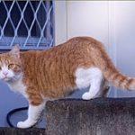 不思議なしゃべる猫・誰も信じてくれないが…orzこいつ普通の猫じゃないわ・招き猫ちゃんねる