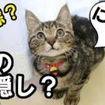 ねこ、まさかの神隠し – Cat disappeared – 【猫(='x'=)】