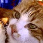 病気の犬が心配な猫の愛情物語 奇跡が起きた!猫の恩返し Cat and Dog Friendship. A heart Touching Story.
