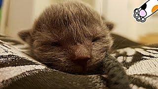 猫の成長の記録・悶絶写真20枚、赤ちゃん猫から子猫へ。猫の10週間はとても早く、大切なものがたくさん詰まっていた・招き猫ちゃんねる