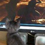 子猫がホラー映画見ると……?