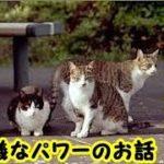 猫の癒やし・猫は宇宙からのプラスエネルギーの受信機であり、巨大な浄化、癒やしのオーラが有り霊的にパワフルな存在です・招き猫ちゃんねる