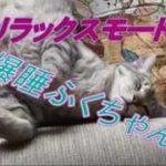 豪快!庭のねこ草食べる猫&ネコのおもしろ寝姿