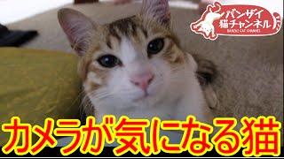 カメラが気になる猫。【猫、おもしろ、かわいい】Cat the camera is anxious