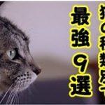 都市伝説・猫の毛の色によって猫の 癒やしのパワーが違うお話・招き猫ちゃんねる